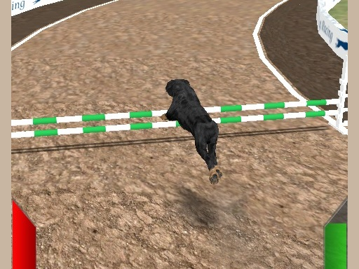 Play Crazy Real Dog Race Game